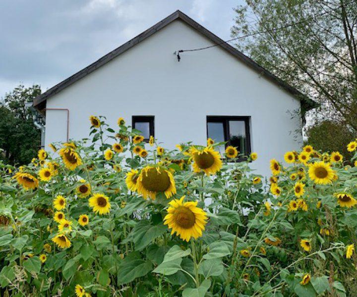 3. Alma Huis